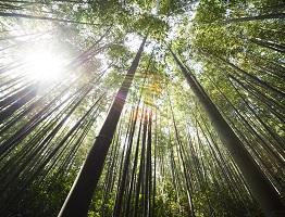 Zelfklevende Bamboe Vloer : Kurk vloeren vloerbedekking ideeën uw vloer